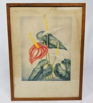 Antique Well Framed Vintage Ted Mundorff Signed Hawaii Airbrush Paintings